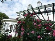 玄関前のバーゴラに咲きほこるバラたち