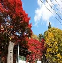 土津神社紅葉