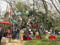 大井関桜まつり
