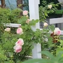*[庭のお花]春から秋にかけては、美しい花々が咲き乱れます!