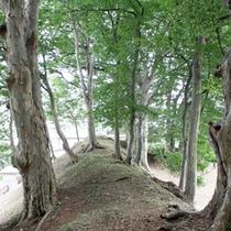 北側の国史跡山形城三の丸跡の大樹林群