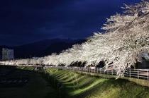 馬見ヶ崎さくらライン 夜桜ドライブコースで有名です。 当館よりお車で約10分