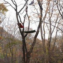 *【ツリーイング】木の上から眺める景色は、いつもとはまた違った美しさです♪