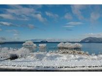 野鳥センターからみた琵琶湖の冬景色
