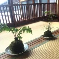 癒しの植物.