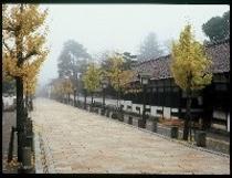 殿町の銀杏並木