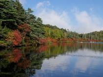 白駒の池の紅葉