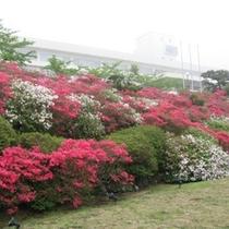 【つつじの庭園】春には庭園でつつじが満開になります