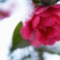 冬 初雪(12月下旬)うっすら雪化粧 金沢にも冬の訪れ・・・
