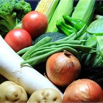 獲れたて新鮮野菜