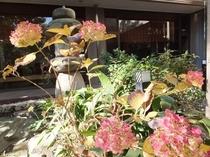 紅葉「紫陽花」(日本庭園)