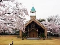 ホテル庭園 桜とチャペル