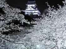 ホテル庭園より 「夜桜と犬山城」