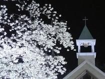 ガーデンチャペルと夜桜