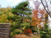 10/12 松乃井周りの紅葉