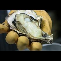 みんな大好きな牡蠣を様々な形で御提供いたします。
