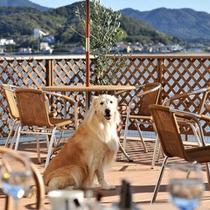 *ドッグカフェ『Cafe the Rodhos』バルコニー席で湖畔の風をワンちゃんと感じてみては?