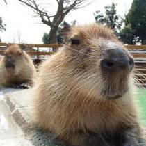 【大山トムソーヤ牧場】いろんな動物たちと気軽にふれあい体験ができるミニ動物園。