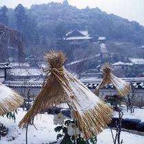 長谷寺の冬牡丹イメージ