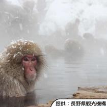 【地獄谷野猿公苑】ホテルから上林温泉駐車場まで車約50分、駐車場から徒歩約30分です。
