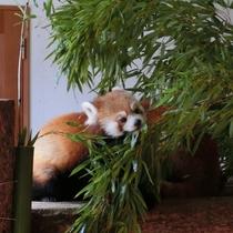 【茶臼山動物園】かわいい動物に会いに行こう!ホテルから車約25分です。