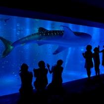 【のとじま水族館】ジンベイザメやイルカとご対面!※お車で約60分
