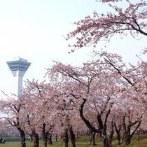 桜五稜郭公園