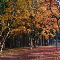 紅葉見晴公園