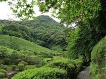 【春慧洲園】慧州園の緑