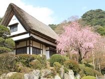 【春観月亭】観月亭と桜