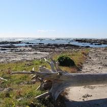 目の前の塩浦海岸