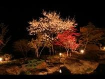 春の中庭、夜