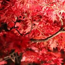 中庭の紅葉