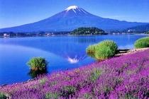 富士山ハーブ