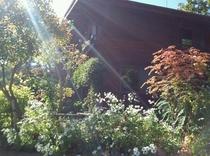 光を浴びて秋の庭