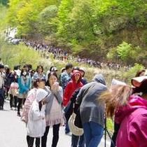 【春】ダム放流には全国から沢山のダムマニアが訪れます!!