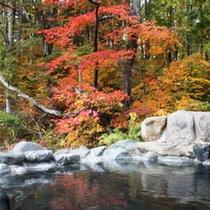 【秋】露天風呂「百景花」の紅葉
