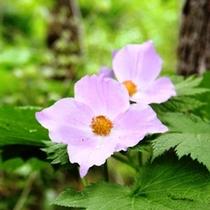 【お庭】お庭にはきれいな花が咲いています。