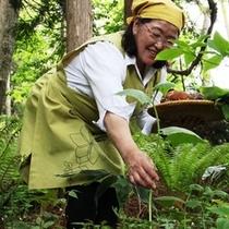 【山菜採り】山菜取りのイメージです。