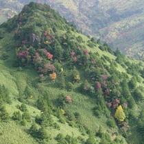 紅葉の池の塔山