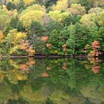 紅葉の長池