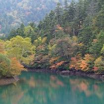 紅葉の大沼池の紅葉