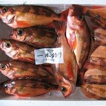 旬の魚 (メバル)