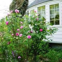 バラの咲く出窓