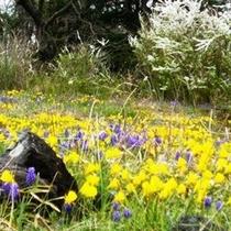 パルコジュームの咲く早春の庭