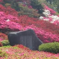 小室山公園つつじ祭り