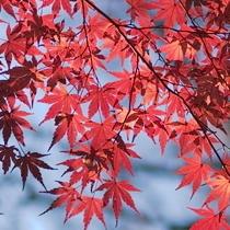 天城や伊豆高原の秋の紅葉も魅力です