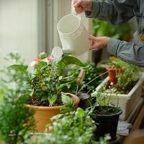 ロビー植物