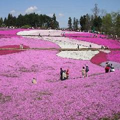 【日本さくら名所100選・長瀞】街全体がサクラ色に染まる♪秩父・長瀞の桜めぐり旅プラン
