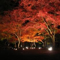 【紅葉】ライトアップ